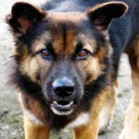 Очередной случай бешенства животных выявлен в Троицком округе