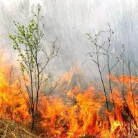 Возгорание сухой травы в Троицком административном округе