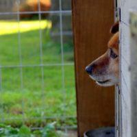 Приют для бездомных животных построят в Троицком округе